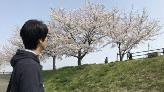 兵庫県三田市 武庫川沿いのサクラを見に行ってきたよ!